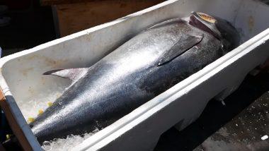 कोलकाता: गंगा में मछली पकड़ने गए शख्स को मिली 18.5 किलो की जंबो भेटकी मछली, नीलामी में मिले इतने रूपये