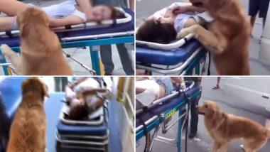 बीमार मालकिन को अस्पताल लेकर गया कुत्ता, वीडियो देख हो जाएंगी आपकी आंखे नम