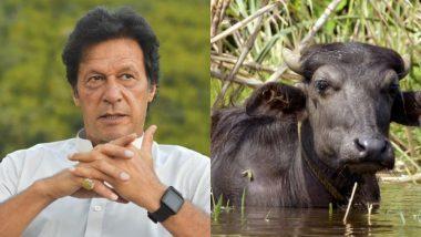 कंगाल पाकिस्तान ने पैसे जुटाने के लिए ढूंढी नई तरकीब, प्रधानमंत्री आवास की बेच डाली 8 भैंसे