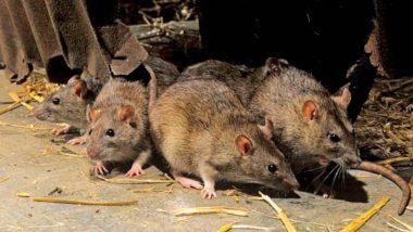 धनबाद के पीएमसीएच आईसीयू में बेहोश कैंसर मरीज पर चूहों का हमला, कुतर कर किया लहूलुहान