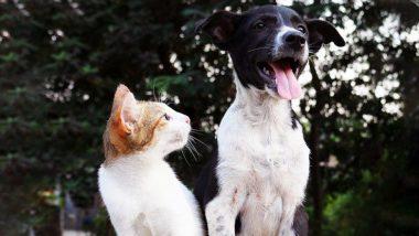कोरोना वायरस ने चीन को सिखाया सबक, शेन्जेन शहर में कुत्ते और बिल्ली के मांस खाने पर लगा बैन
