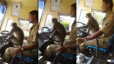 कर्नाटक में लंगूर ने चलाई बस, सामने आया ये हैरतंगेज वीडियो