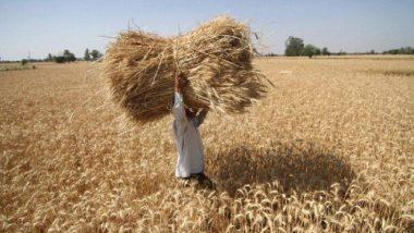 दशहरे पर मोदी सरकार का किसानों को बड़ा तोहफा, रबी फसलों पर न्यूनतम समर्थन मूल्य बढ़ाया