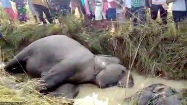 ओडिशा में करंट लगने से 7 हाथियों की मौत, वन विभाग के अधिकारी जांच में जुटे