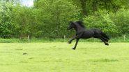 पुणे: बुंद गार्डेन के पास रथ हुआ बेकाबू, घोड़े ने अपने मालिक को रौंदा