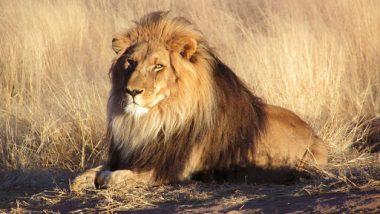 गुजरात: गिर के जंगल में ट्रेन से कटकर 3 शेरों की मौत