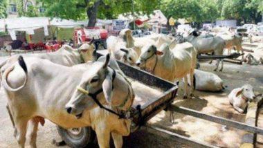 यूपी: दिवाली के दिन एटा में बड़ा हादसा, गौशाला में करंट लगने से 11 गायों की मौत