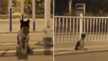 एक्सिडेंट में हो गई थी मालिक की मौत, कुत्ता 80 दिनों तक करता रहा इंतजार, VIDEO देख रो पड़ेगे आप