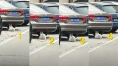 कार के नीचे शिद्दत से वर्कआउट करती इस बिल्ली का वीडियो तेजी से सोशल मीडिया पर हो रहा है वायरल, आप भी देखें