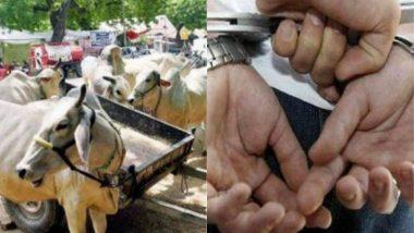 अयोध्या: सात गायों से बलात्कार करनेवाला आरोपी रंगे हाथों गिरफ्तार, सीसीटीवी फुटेज में पूरी घटना रिकॉर्ड