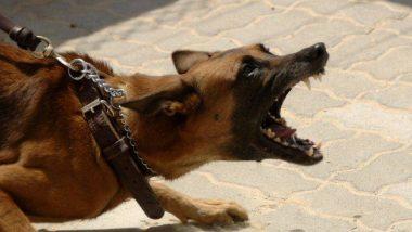 मुंबई में इंसानियत हुई शर्मसार, 4 लोगों ने एक बेजुबान कुत्ते को बनाया अपनी हवस का शिकार