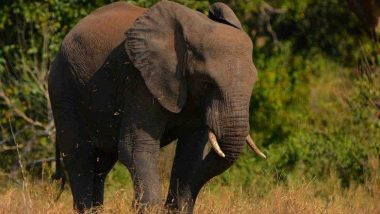 हाथियों के हमले में 60 वर्षीय वृद्ध की मौत, गांव के हालात बिगड़े
