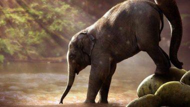 Watch Video: तमिलनाडु और आंध्र प्रदेश में हाथियों का तांडव, वन अधिकारी को पटक-पटककर उतरा मौत के घाट