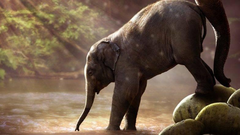 असम के बोकाजन में बिजली का करंट लगने से हाथी की मौत, देखें इस दर्दनाक वीडियो को