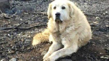 उत्तरी कैलिफोर्निया आग: भीषण आग की चपेट में आया घर लेकिन रखवाली करता रहा कुत्ता