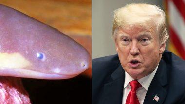 डोनाल्ड ट्रंप के नाम पर रखा गया इस अजीब प्राणी का नाम, अमेरिकी राष्ट्रपति के मौसमी मिजाज को ध्यान में रखकर किया नामकरण