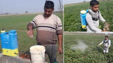 आलू की अच्छी पैदावार के लिए इस राज्य के किसान कर रहें हैं शराब का छिड़काव