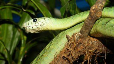 Snake Viral Photo: पब्लिक पार्क में पेड़ से लिपटा हुआ दिखा विशाल सांप, तस्वीर देख आप भी हो जाएंगे सन्न