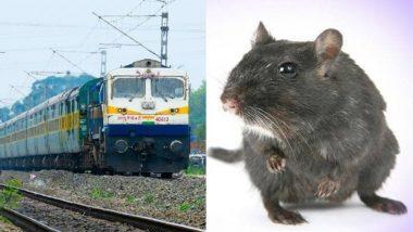 बिहार की ट्रेनों में कॉकरोज व चूहों का आतंक, आंख लगते ही कुतर देते हैं यात्रियों का कीमती सामान और...