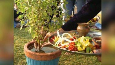 Tulsi Vivah 2019: तुलसी विवाह के दौरान इन बातों का रखें ध्यान, होंगी सभी परेशानियां दूर