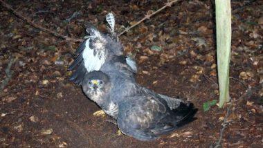 मुंबई: चाइनीज मांझे का कहर, 130 से ज्यादा पक्षी हुए घायल