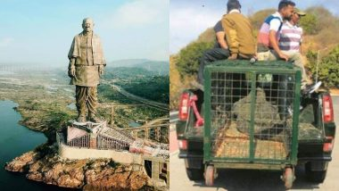 गुजरात: स्टैच्यू ऑफ यूनिटी पर्यटकों की सुरक्षा के लिए मगरमच्छों को किया जा रहा है स्थानांतरित
