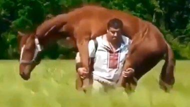 500 किलो के घोड़े को सांप ने कांटा, जान बचाने  लिए कंधे पर उठाकर मालिक ने तय की 5 किलोमीटर की दूरी: देखें VIDEO