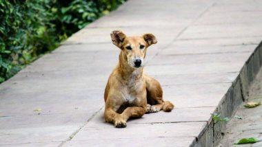 मुंबई में दरिंदगी की सारी हदें पार, कुत्ते को हैवानों की तरह पीटा, तड़प-तड़प कर अस्पताल में तोड़ा दम