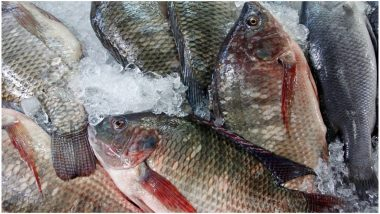 बिहार: आंध्र और बंगाल से आने वाली मछली पर रोक, बिक्री करते पकड़े गए तो 7 साल जेल और 10 लाख जुर्माना