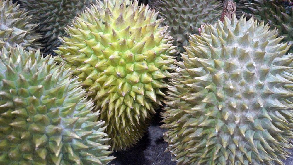 नाले के पानी जैसा स्वाद है इस फल का, कीमत जानकर खिसक जाएगी पैरों तले जमीन