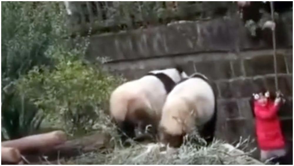 खूंखार जानवर के बाड़े में गिर गई बच्ची, वायरल हो रहा ये खतरनाक VIDEO