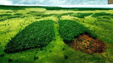 पृथ्वी की परिक्रमा कर रहे उपग्रह के अनुसार, दुनिया को हरा-भरा बनाने में भारत और चीन सबसे आगे