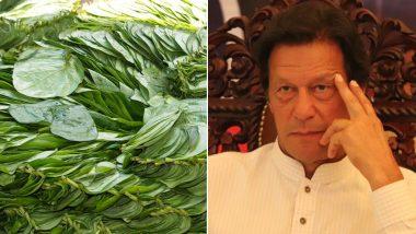 भारत से दुश्मनी का असर: टमाटर के बाद अब पान को भी तरसेगा पाकिस्तान, भारतीय किसानों ने बंद की सप्लाई