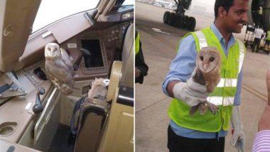 मुंबई: Jet Airways के विमान में बैठा मिला उल्लू, कर्मचारियों में मची सेल्फी लेने की होड़