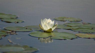 World Wetlands Day 2019: 2 फरवरी को मनाया जाता है विश्व वेटलैंड्स दिवस, जानिए जलवायु संरक्षण के लिए आद्रभूमि को क्यों माना जाता है महत्वपूर्ण?