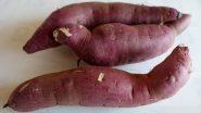 Health Benefits of Sweet Potatoes: शकरकन्द से होते हैं ये चमत्कारिक स्वास्थ लाभ