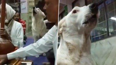 महाराष्ट्र: मंदिर में कीर्तन के दौरान कुत्ते ने शुरू कर दिया गुनगुनाना, वायरल हो रहा ये वीडियो, आप भी देखें