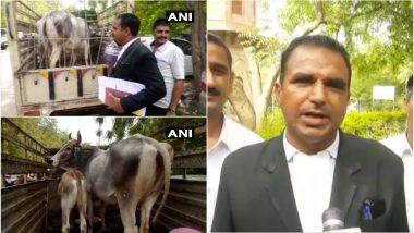 राजस्थान: जोधपुर के एक कोर्ट में गाय की हुई पेशी, जानिए क्या है कारण