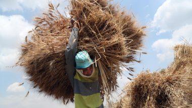 लोकसभा चुनाव 2019: नई सरकार के सामने कृषि संकट एक बड़ी चुनौती