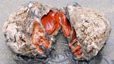 इस जिंदा पत्थर को काटने से निकलता है खून, इसके अंदर मौजूद मांस चाव से खाते हैं लोग, देखें वीडियो