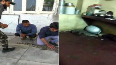गुजरात: वड़ोदरा के रावल गांव के एक घर में मगरमच्छ घुसा, वाइल्डलाइफ रेस्क्यू टीम ने उसे सुरक्षित स्थान पर छोड़ा