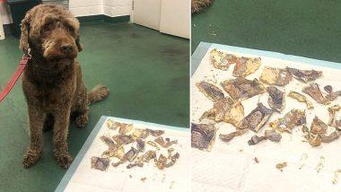 दुनिया का सबसे अजीबोगरीब कुत्ता, जो खा गया अपने मालिक के 15 हजार रूपये, फिर जो हुआ?