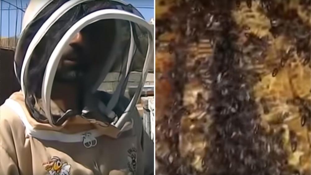 स्पेन: बेडरूम की दीवार के अंदर मिली 80 हजार मधुमक्खियों की फौज, वीडियो देखकर हो जाएंगे हैरान