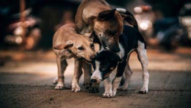 यूपी: ऑपरेशन थिएटर के अंदर कुत्तों  ने नवजात शिशु को नोचा,  मौत के बाद पुलिस ने अस्पताल को किया सील