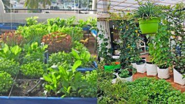बिहार : सरकार ने छेड़ी नई मुहीम, अब घर की छतों पर उगेंगी सब्जियां और फल