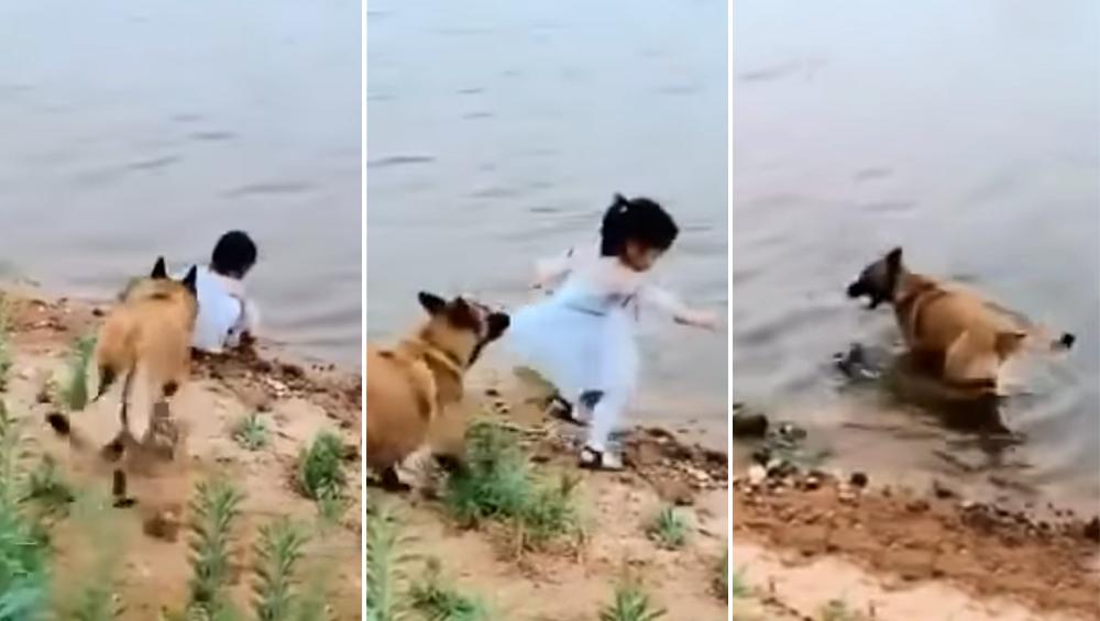 एक छोटी सी बच्ची की जान बचाने के लिए कुत्ते ने जो किया, उसे देख आप भी कहेंगे तुम्हारी वफादारी को हमारा सलाम...देखें VIDEO