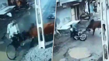 गुजरात के सड़क पर सनक उठा सांड, साइकिल सवार को उठाकर पटका: देखें VIDEO