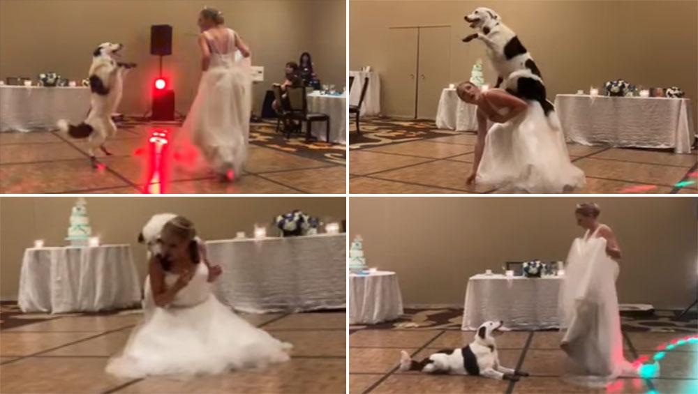 अपनी मालकिन की शादी में झूमकर नाचा कुत्ता, वीडियो देखकर हैरान रह जाएंगे आप
