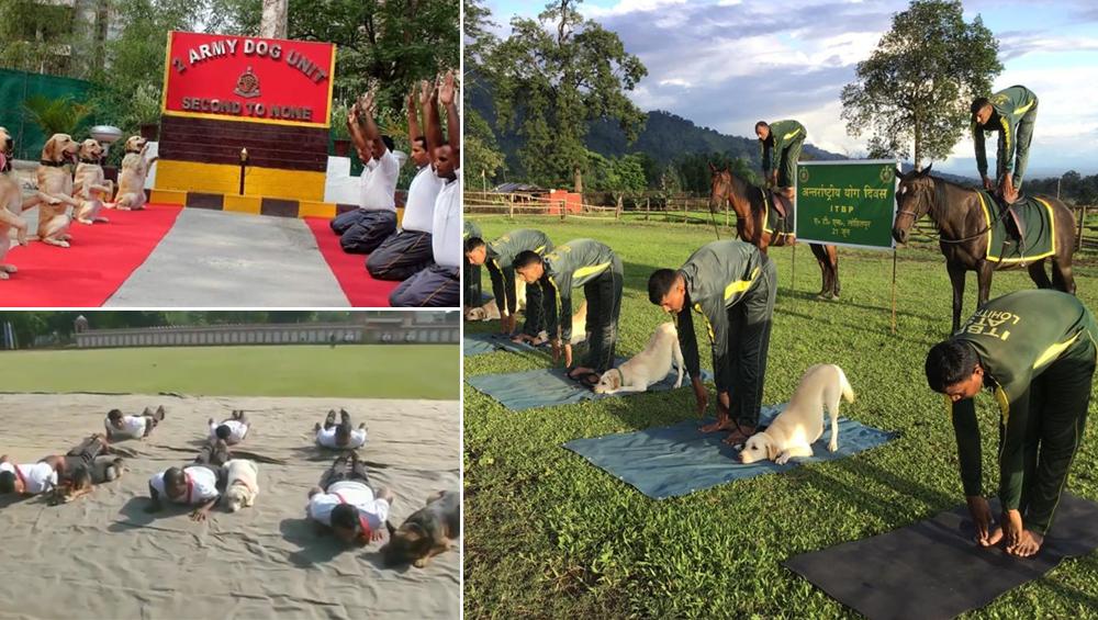 International Yoga Day 2019: अंतर्राष्ट्रीय योग दिवस पर जवानों ने कुत्तों के साथ किया योग, देखें वीडियो और तस्वीरें