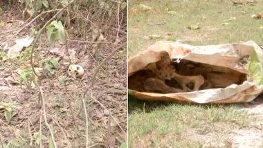 मुजफ्फरपुर के SKMCH अस्पताल परिसर की झाड़ियों में मिले कई नरकंकाल, मचा हड़कंप
